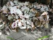 Muschelfriedhof
